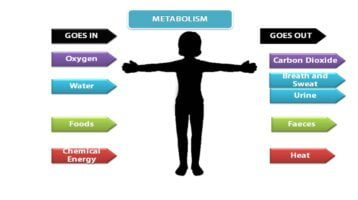 dieta acelera metabolismo Consejos y Guía