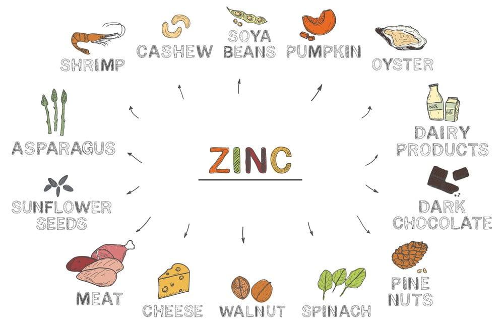 14 Zinc Rich Food Which Boost Your Immunization Power