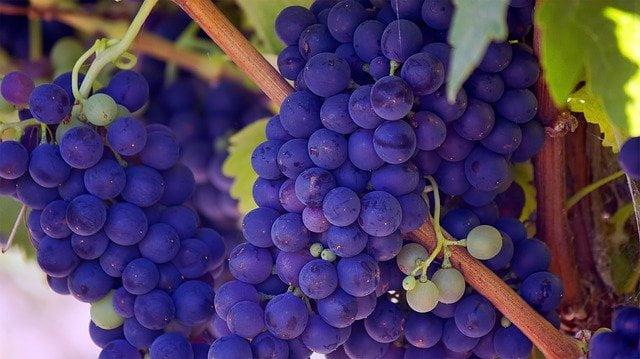 grapes Food Inflammation