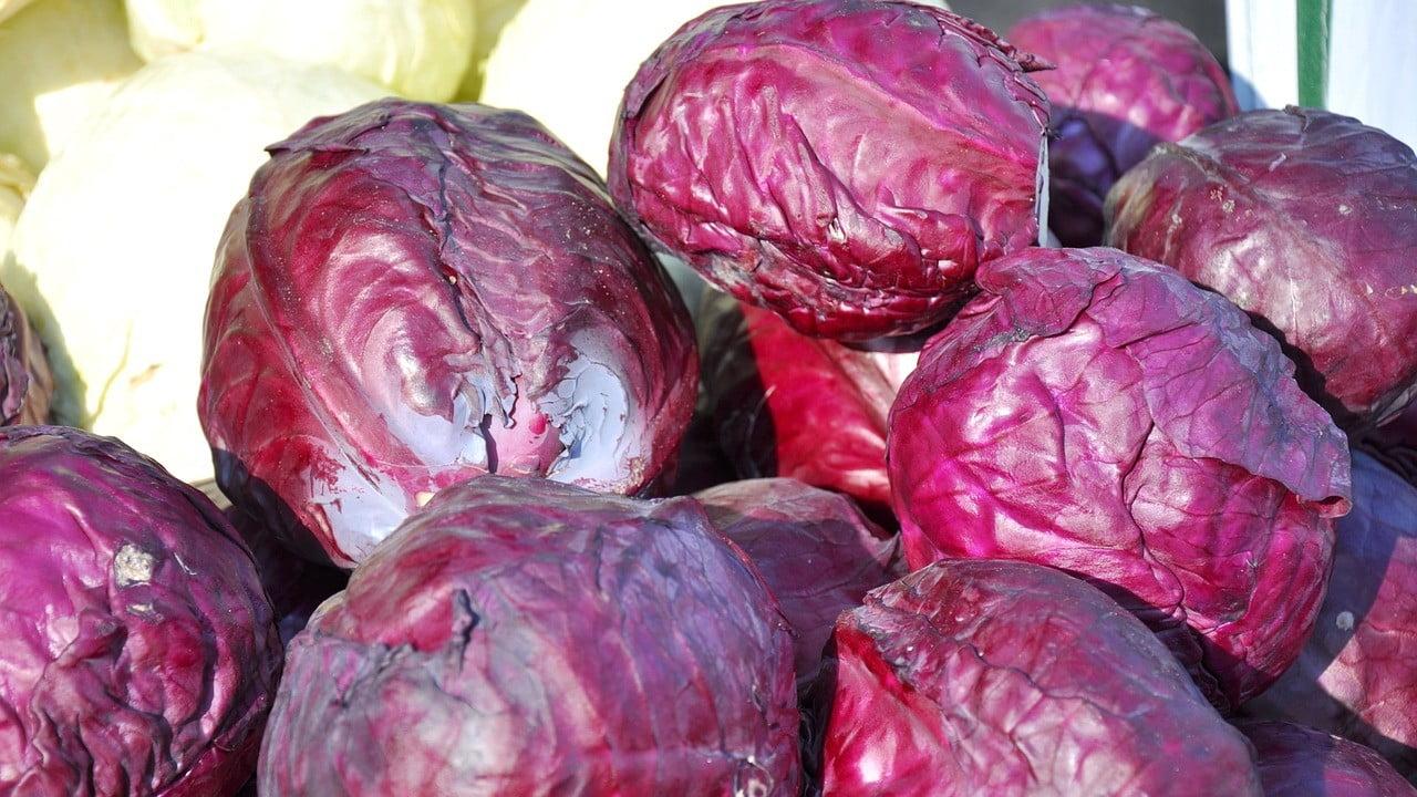 12 Health Benefits of Purple Cabbage
