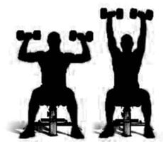 Seated Dumbbell exercise