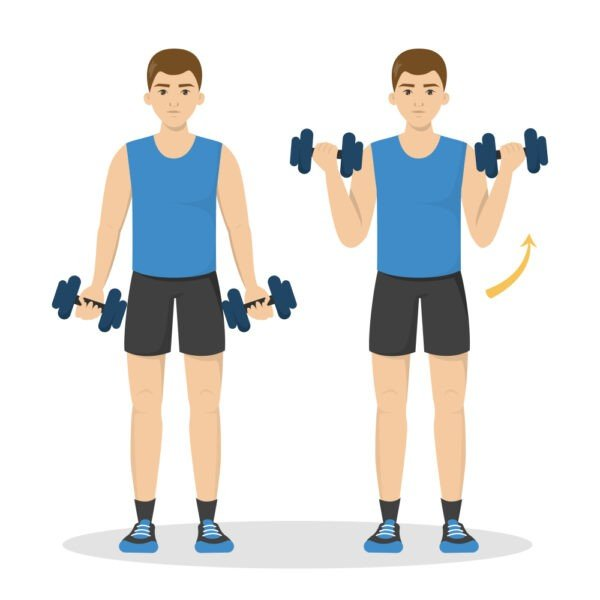 Bicep Curls Upper Body Exercises